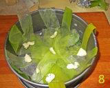 gm-gateau-patate-porri-patate-foglie-stampo-gallery-8