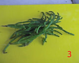 gm-linguine-cozze-tonno-asparagi-mare-tagliati-gallery-3